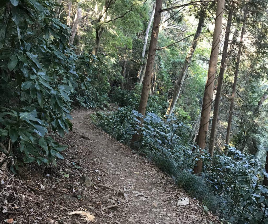 高尾山の登山道